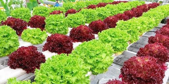 为什么农作物虫害越来越严重?