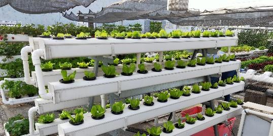 立体种植架无土栽培,让你种好每一棵菜!
