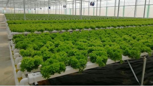 现代农业未来4大发展趋势,快来看→