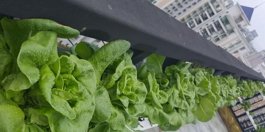 家庭管道水培蔬菜,其实很简单!