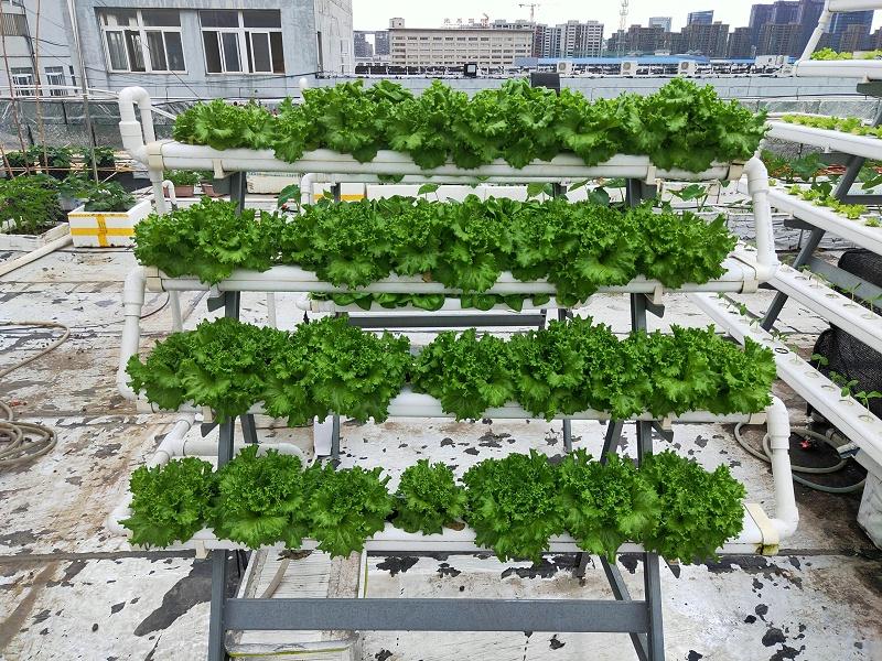 图:南通荣成农业 立体种植架 水培蔬菜