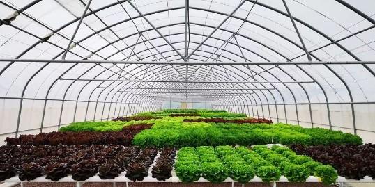 融合互联网的智能化农业,从哪里入手?