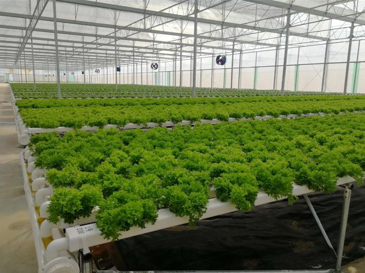 荣成农业 蔬乐管无土栽培案例