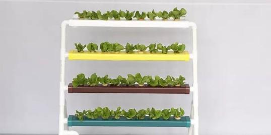 家庭阳台种植蔬菜 ,你还在愁用什么种吗?