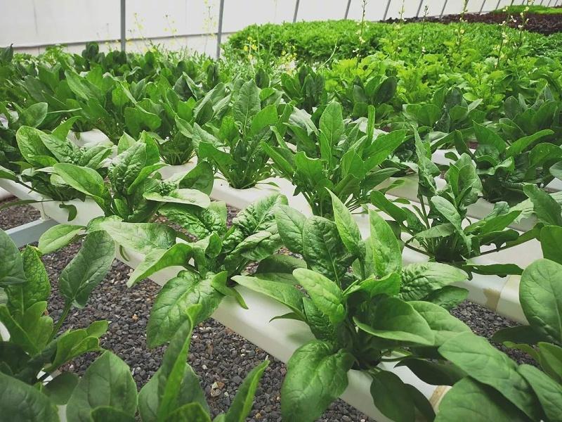 青岛 蔬乐管 叶菜类水培管道 SGD090050 N4