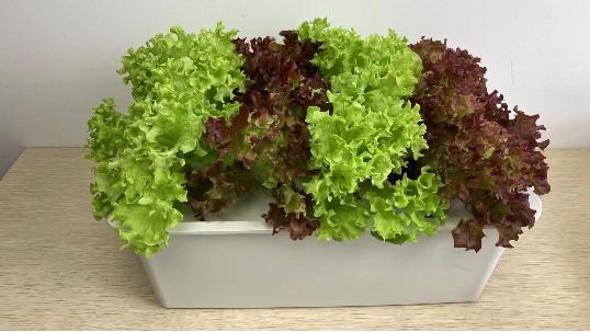 水培蔬菜种植设备,种植小白也可以简单上手!