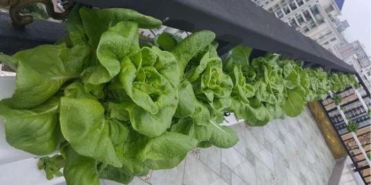种水培蔬菜,就选蔬乐管