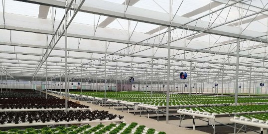 中国农业哪些人将会成为种地的主要力量?