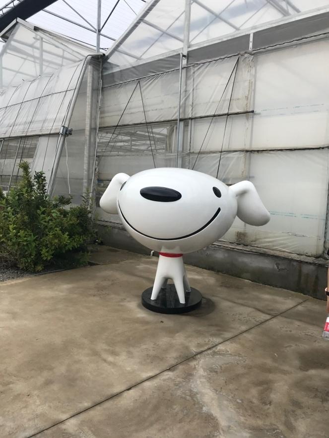 江苏荣成农业:京东的标志,后面大棚外观很普通