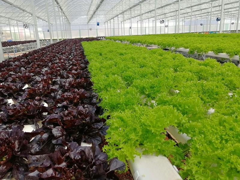 温室大棚内荣诚农业蔬乐管水培管道种植