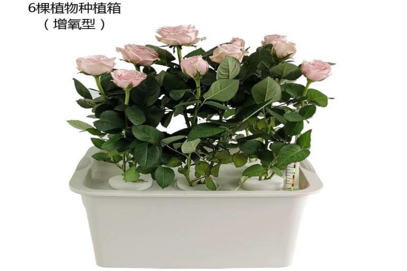 江苏荣诚农业 水培种植箱 水培蔬菜