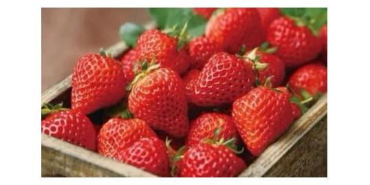 草莓观光火爆,农民该如何借助这波潮流大赚一笔?