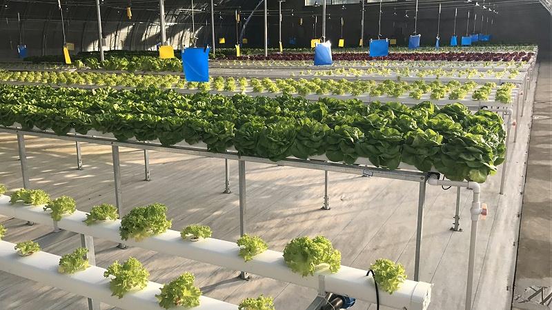 北京 蔬乐管 叶菜类水培管道 SGD090050 12