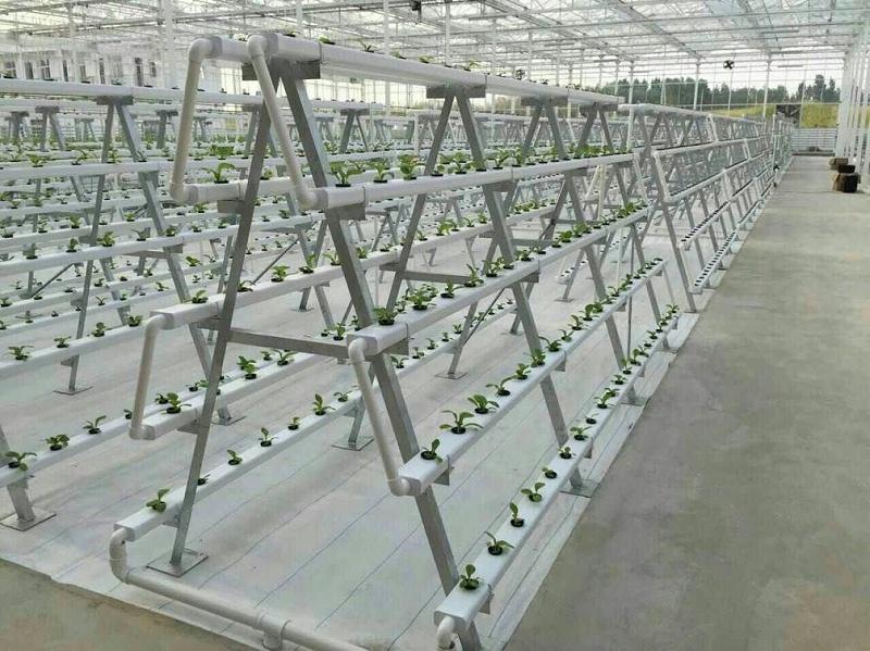 图:立体无土栽培设备