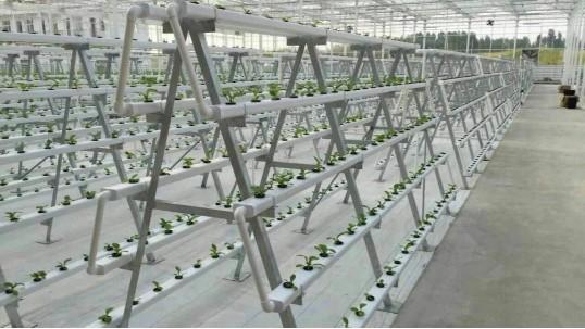 立体无土栽培设备,菜居然能种在空中!