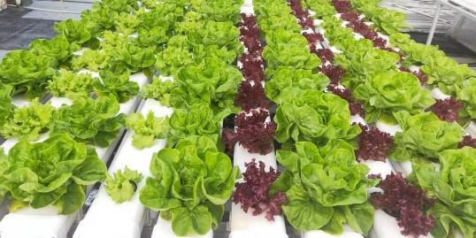 阳台农业带你领略家庭中的无土栽培!