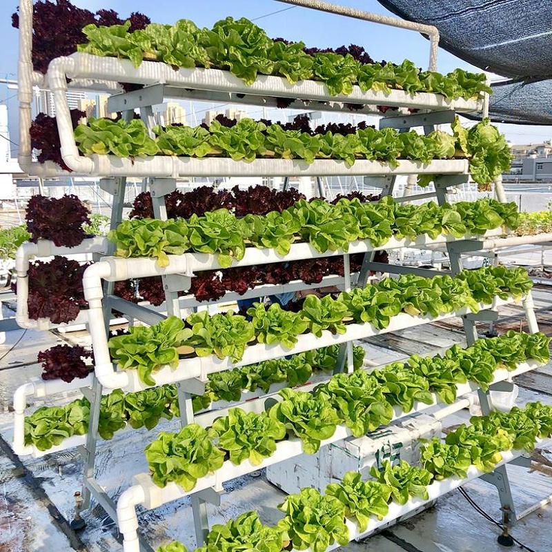 南通荣成 168棵蔬菜金属水培种植架