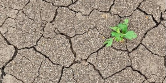 """""""土壤板结""""怎么办?你可以用无土栽培呀!"""
