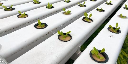 无土栽培设备厂家,就该这么选!