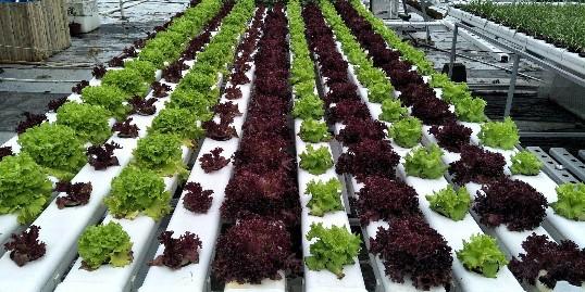农业信息化,你值得关注的3大发展模式