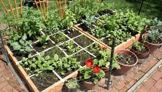 图:一米菜园