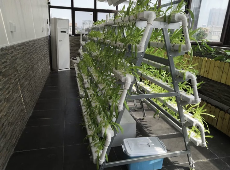 图:江苏荣诚农业 蔬菜无土栽培设备