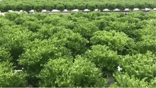 无土栽培设备,为什么他家的设备不用除藻?