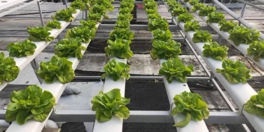 无土栽培管道:还是选择蔬乐管!