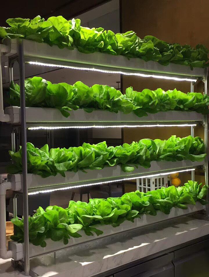 蔬乐管无土栽培管道案例