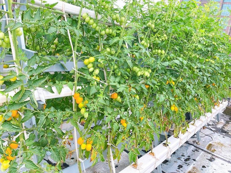图:无土栽培设备全遮光100160mm 水培果蔬管道