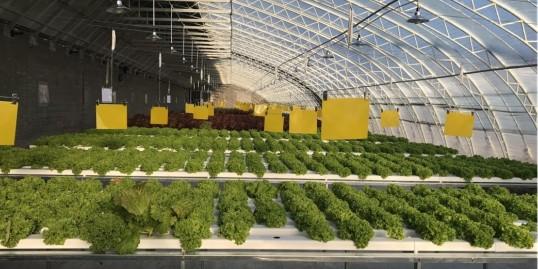 想放弃却又一直坚持的事:做专业的无土栽培设备!