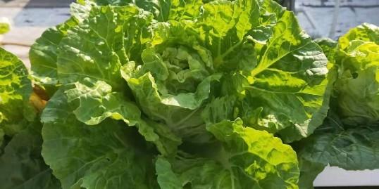 无土栽培:阳台种菜就选它——40棵菜金属种植架