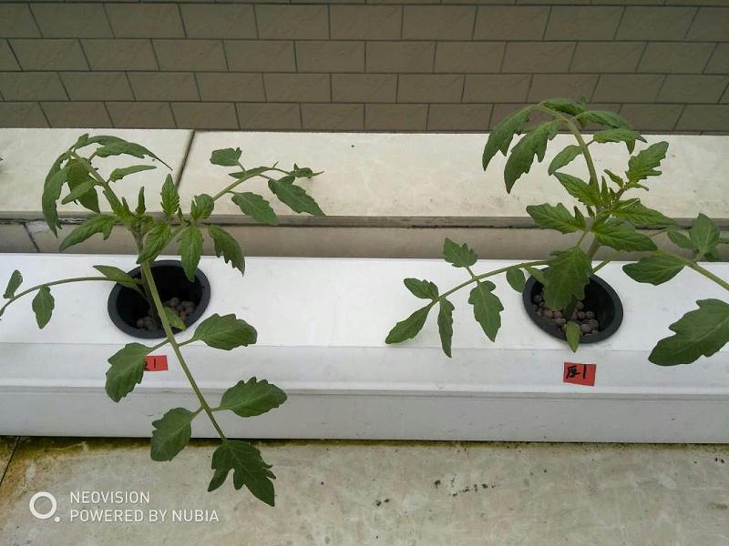 蔬乐管水培管道