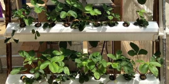 无土栽培设备,享受在家种植的乐趣!