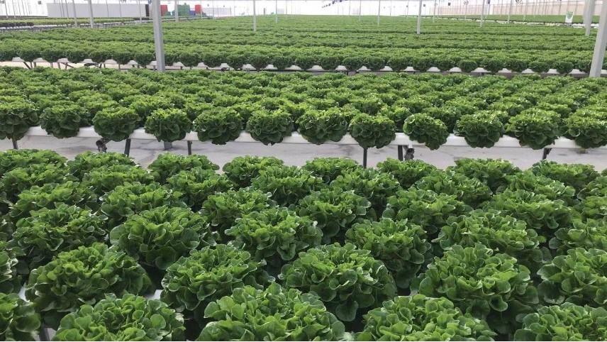 云南的扶贫项目,无土栽培蔬菜长势喜人!