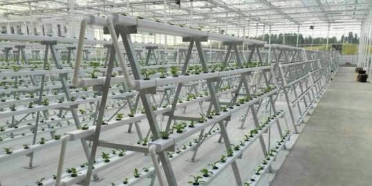 立体式蔬菜种植架哪种好? 你知道吗?