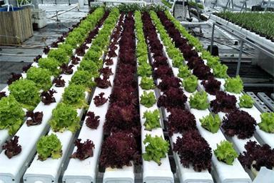 图:露天种菜 蔬乐管水培管道
