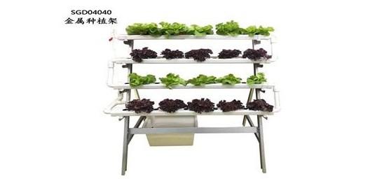封闭式阳台也可以种菜哟!