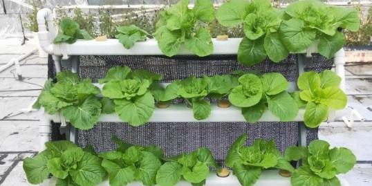 怎么在阳台上种菜 ,赶快看看吧!