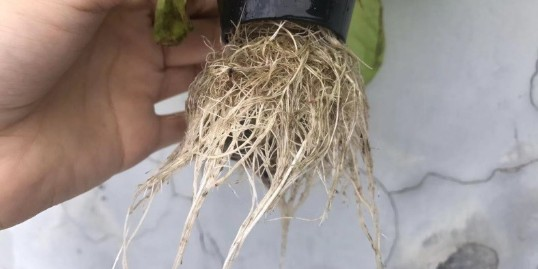 选择无土栽培定植篮 ,看准这几点?