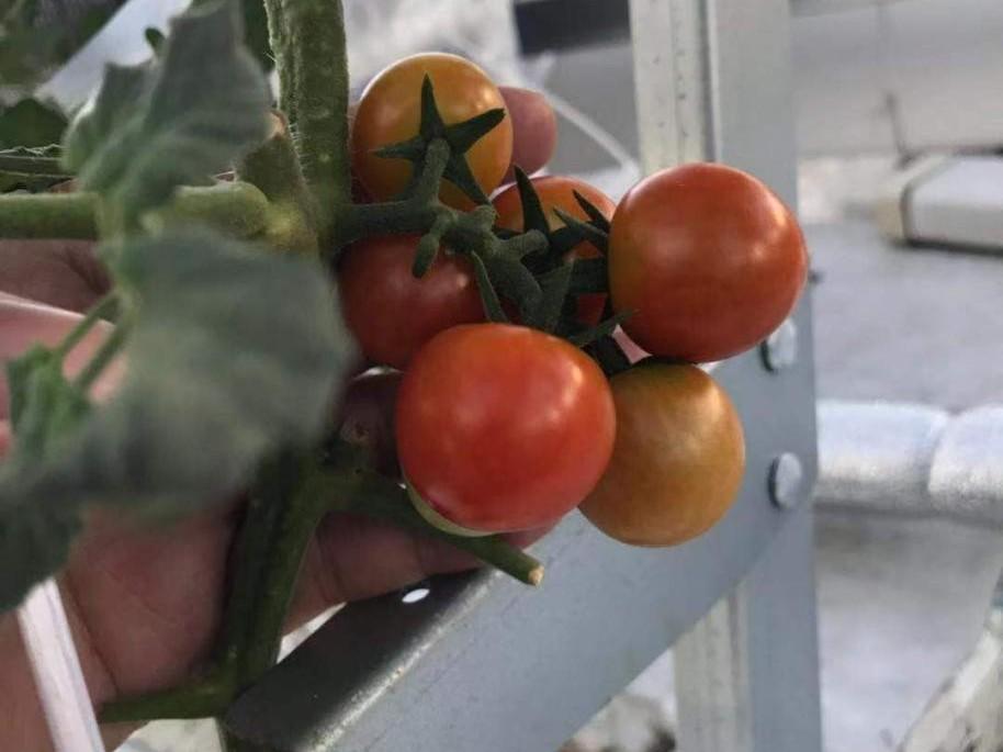 阳台蔬菜种植,春天一定要种这些蔬菜!