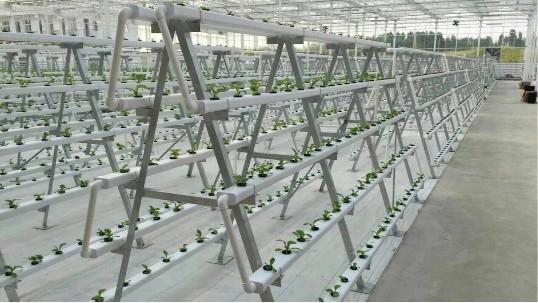 立体无土栽培设备,你还在犹豫?