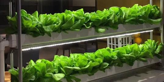 随摘随吃的水培蔬菜,你爱了吗?